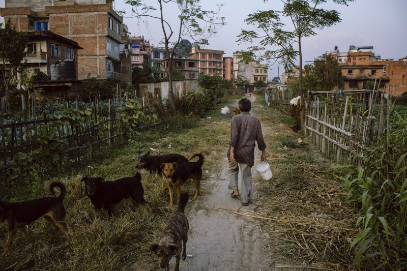 Ein Mann und Hunde im Westen Kathmandus.